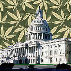 marijuana daylin leach senate bill 528 dc