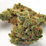 jilly-bean-medical-marijuana-weed-strain-thcf-jillybeanweed-d85621146feb9667eb35032d90652b3a127f98c0