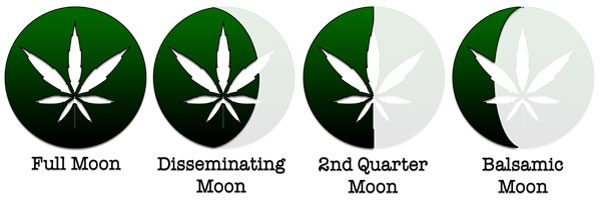 harvesting <strong>weed</strong> moon