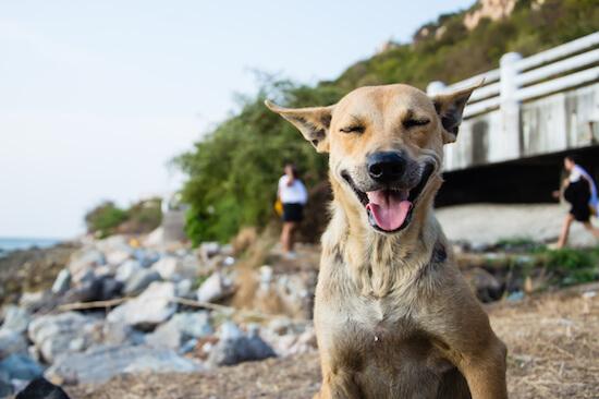 Happy dog on a beach