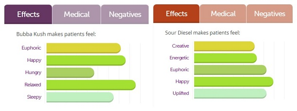 Bubba Kush vs. Sour Diesel cannabis effects