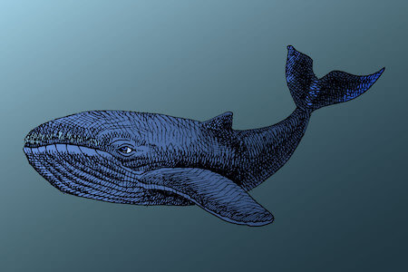 Illustrated whale, moby dick strain for anxiety