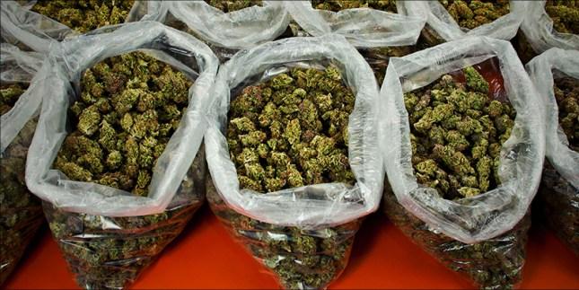 Weed Drug Test | #1 Michigan Medical Marijuana
